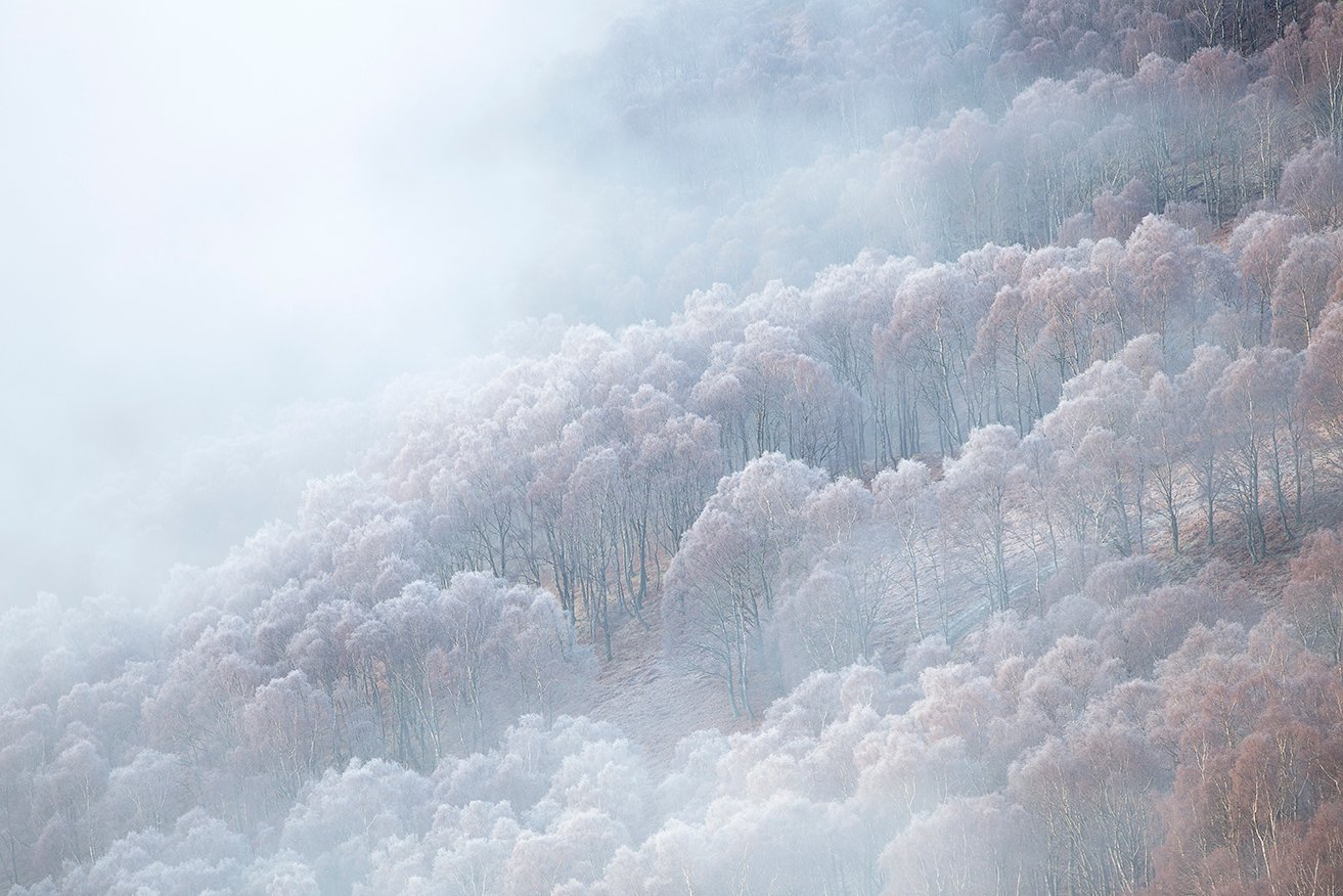 Trees frost_6001